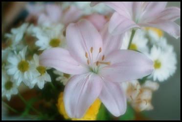Flower by AlucardDisease