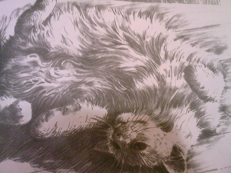 Rollin' Kitten by SeelederZukunft