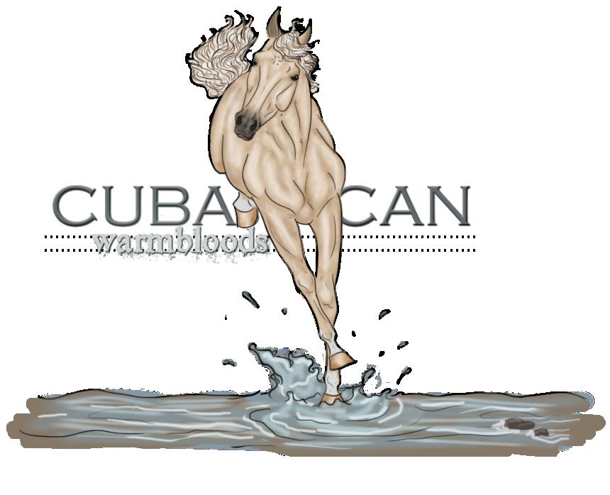CubanacanWarmbloods's Profile Picture