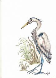 Garca - Heron by ThaisMelo