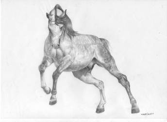 Horse 16