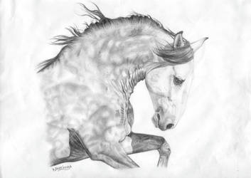 Horse 20