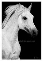 Horse by petbet1