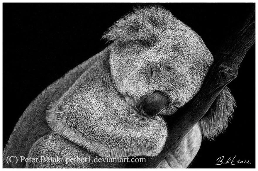 Sleeping koala by petbet1 on DeviantArt