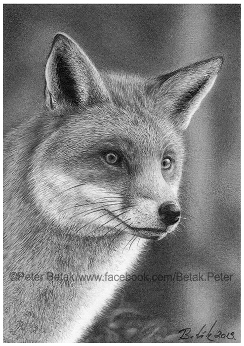 ACEO Fox drawing by petbet1