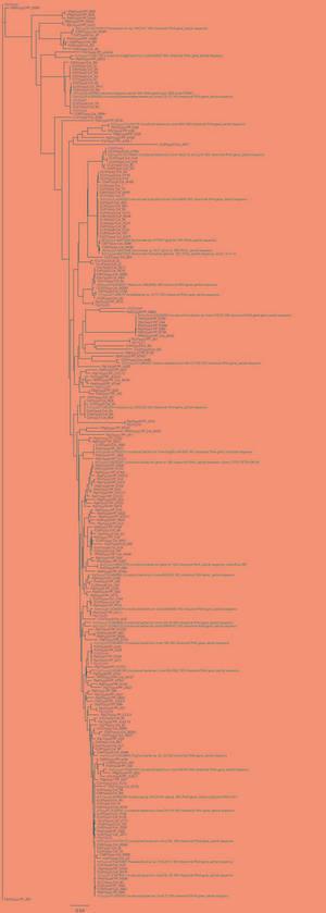 Hellish Phylogeny: