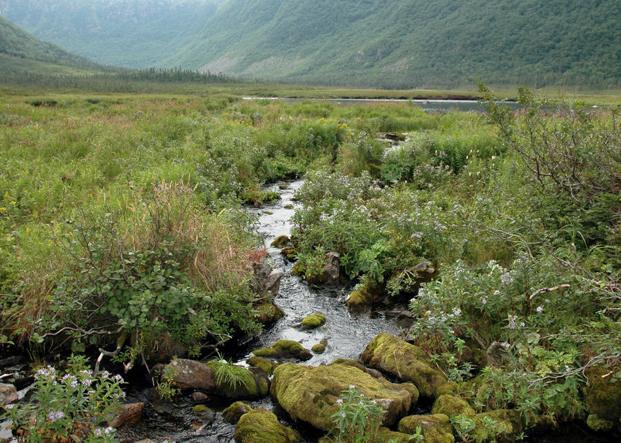 Brook by the mountain by LucieG-Stock