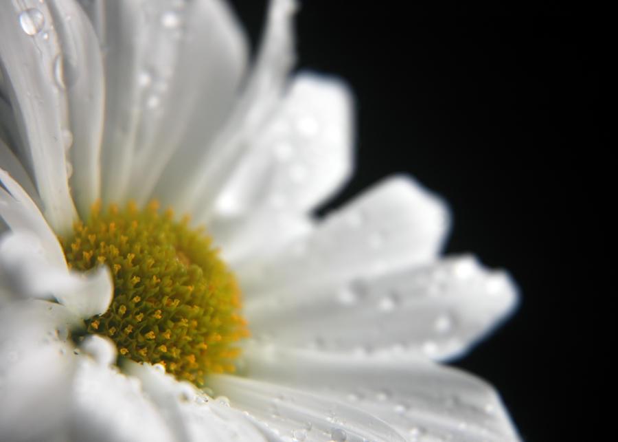 Dreamy daisy 2 by LucieG Stock