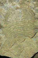 Fossil by LucieG-Stock