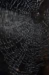 Sparkly web 1