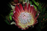 strange flower 2