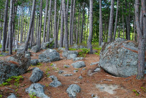 Forest of erratics by LucieG-Stock