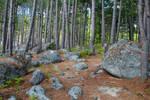 Forest of erratics
