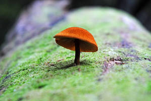 A cute mushroom