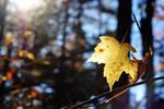 Autumn colors 3