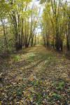 Leaf covered road 4