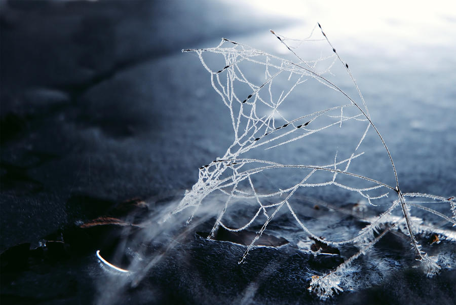 frosty morning 3 by LucieG-Stock