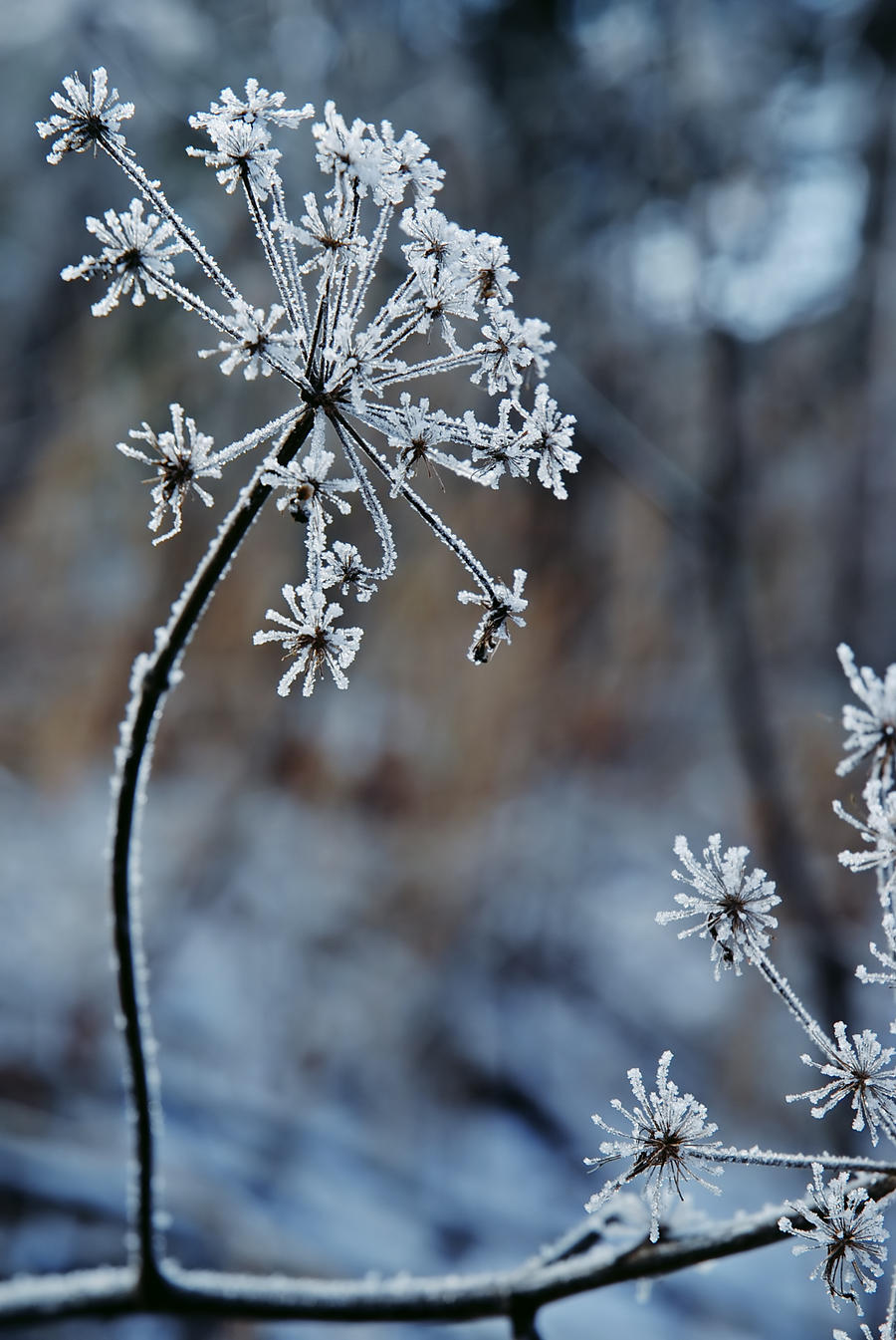 Frozen fireworks 2 by LucieG-Stock