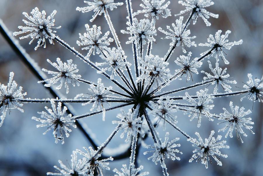 Frozen fireworks 3 by LucieG-Stock