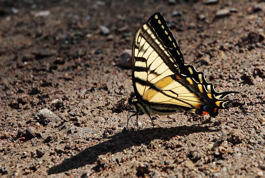 butterfly 6 by LucieG-Stock