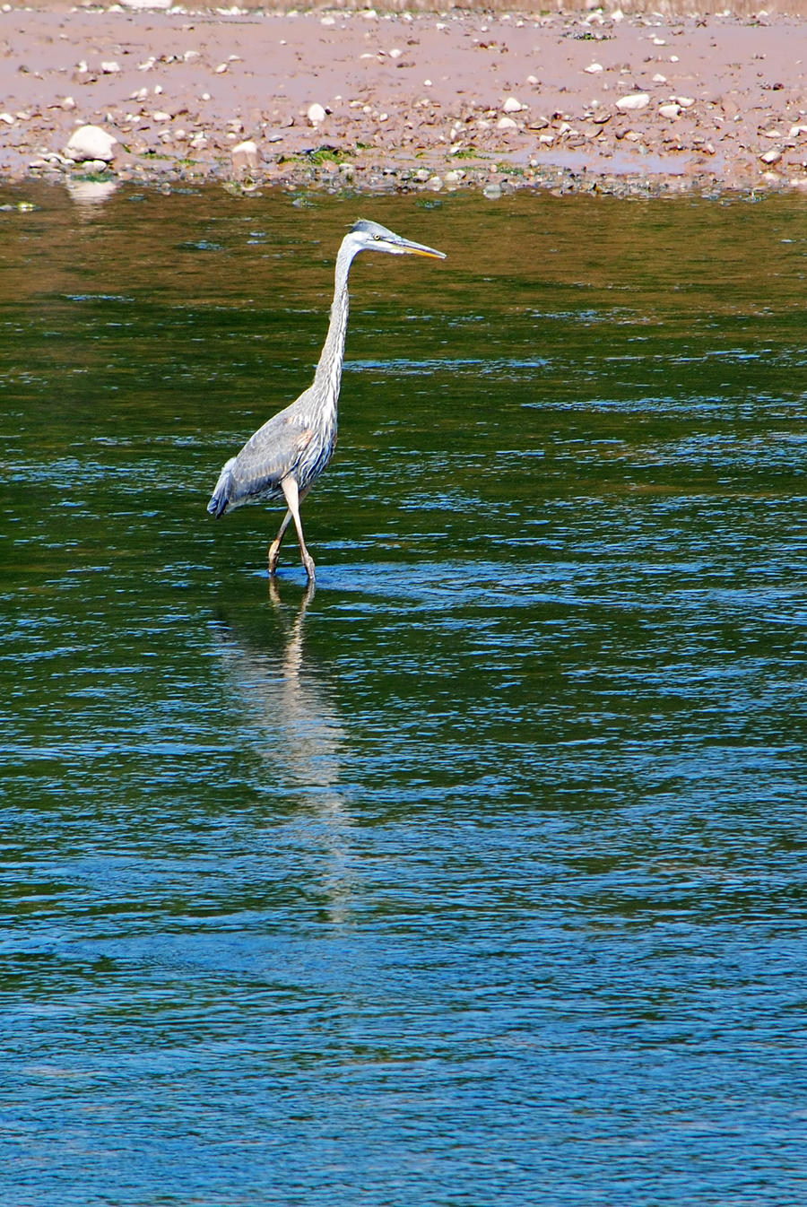 Great heron 2 by LucieG-Stock