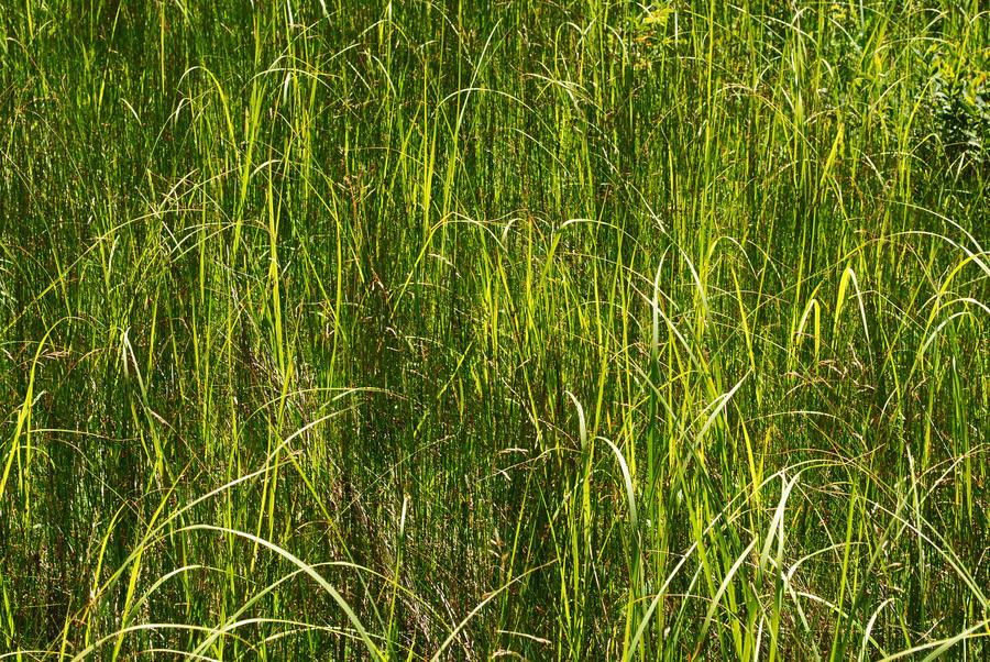 Tall grass 3 by LucieG-Stock