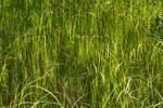 Tall grass 3