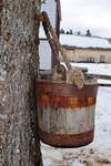 maple water collecting bucket