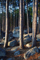 rocks and trees 1 by LucieG-Stock