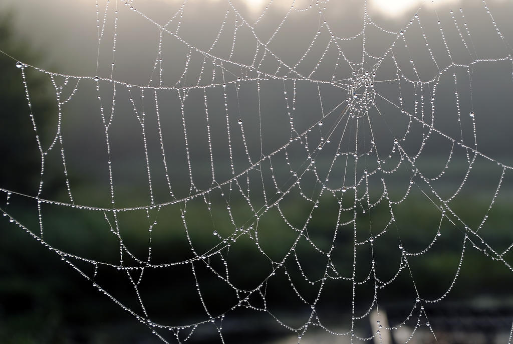 Web 2 by LucieG-Stock