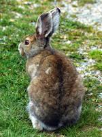 Bunny 3 by LucieG-Stock