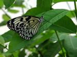 resting on a leaf