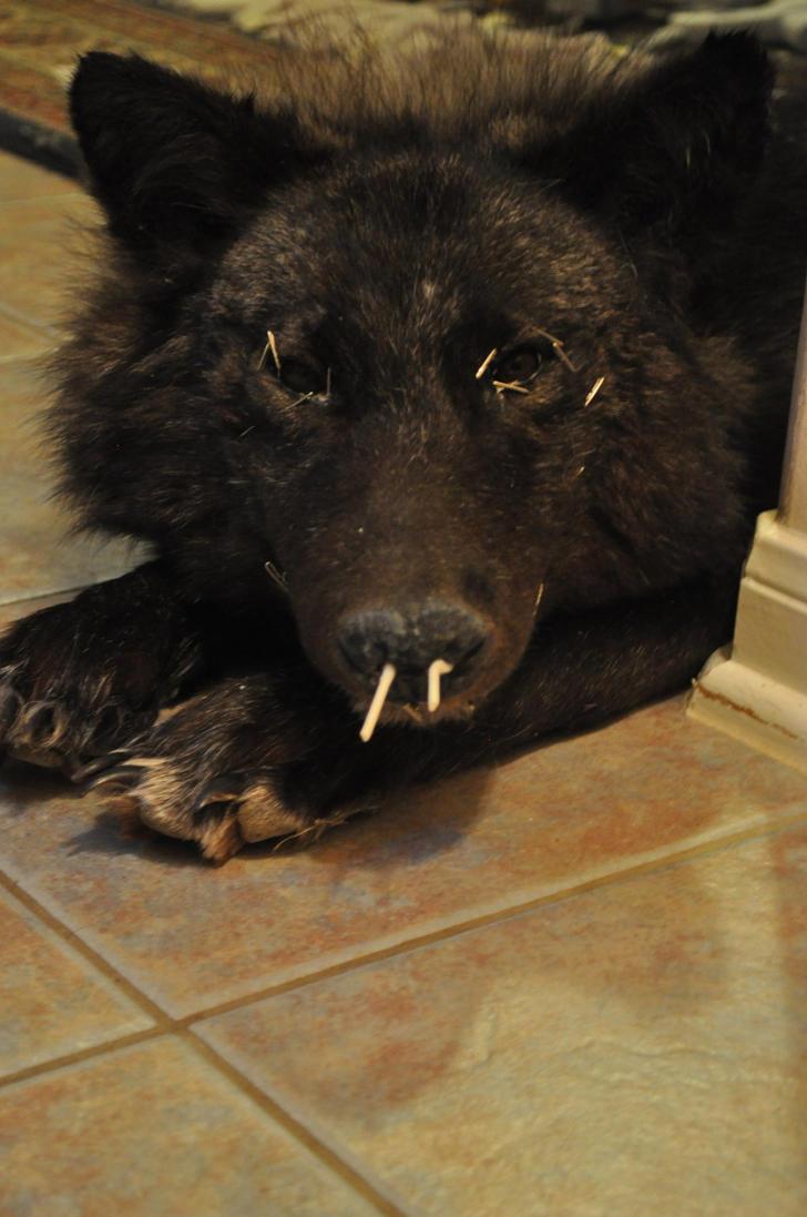 Black wolf WIP by FoxyCreations