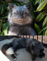 Pearl fox Softmount by FoxyCreations