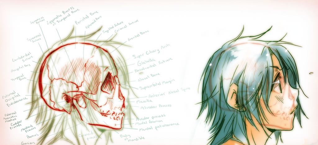 Skull Anatomy By Saiyukiluver On Deviantart