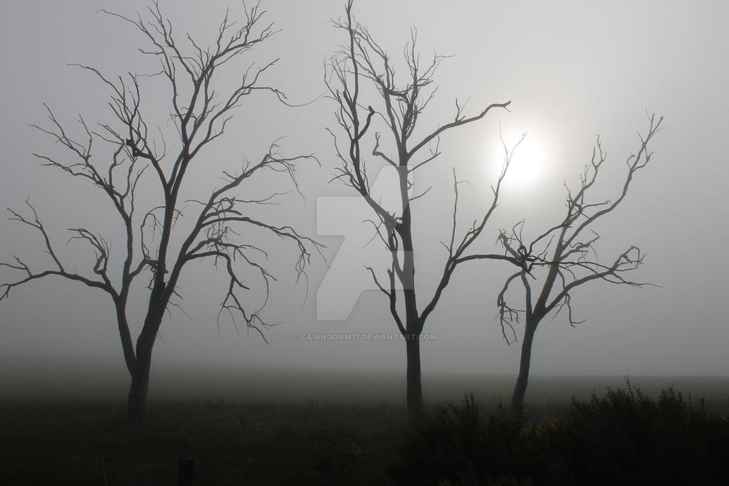 Morning Fog by Cairngorm77