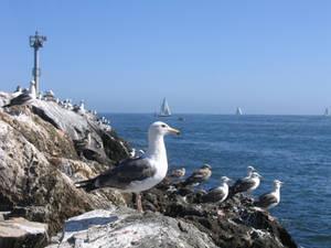 Newport Seagulls