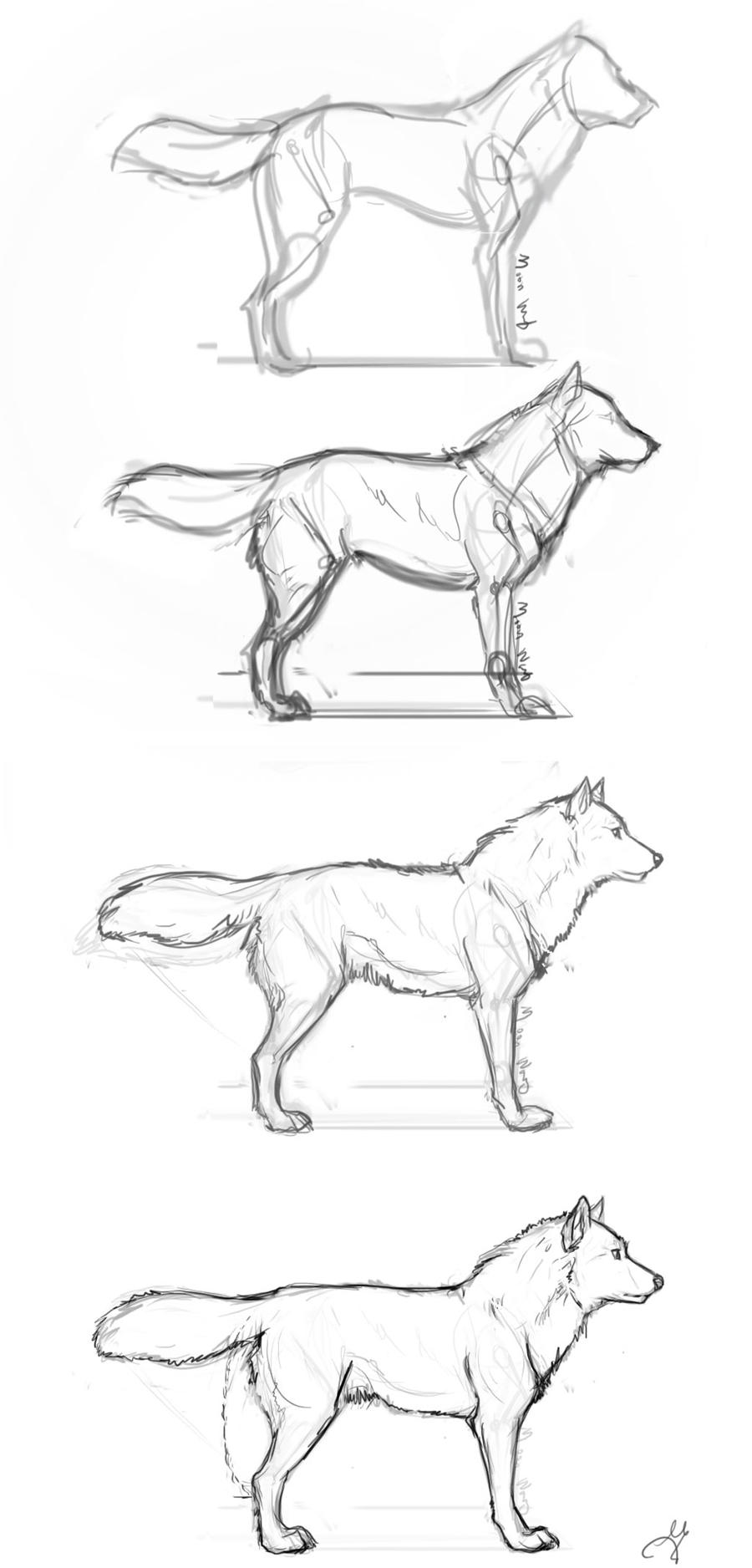Wolf Drawing Step By Step