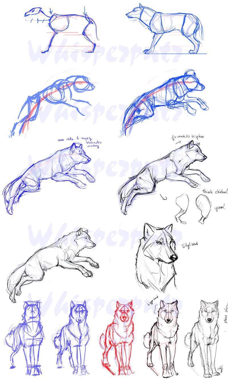 Поза волка