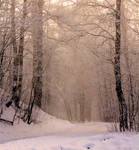 Premade background: Winter forest