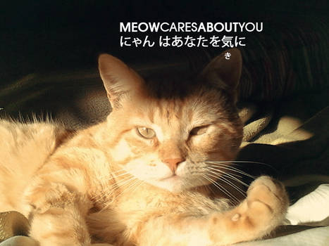 Pet Work : Emperor AL (my awesome cat)