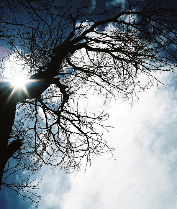 sun.  tree.  sky. by ashenweepingwillow