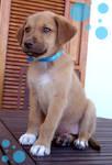 Cute puppy - girl 3