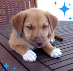 Cute puppy - girl 3 - pic 2