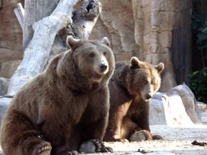 Bears Couple