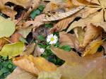 Hiding between leaves