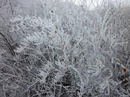 Snowy bush by glanthor-reviol