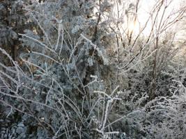 Frozen park by glanthor-reviol