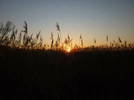 Sunset over reeds by glanthor-reviol