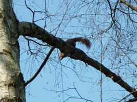 Hiding squirrel by glanthor-reviol